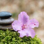 肥料の三要素の働きとは?「窒素・リン酸・カリ」比率の簡単な覚え方