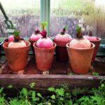 環境に合った素焼き鉢の選び方とアイディア