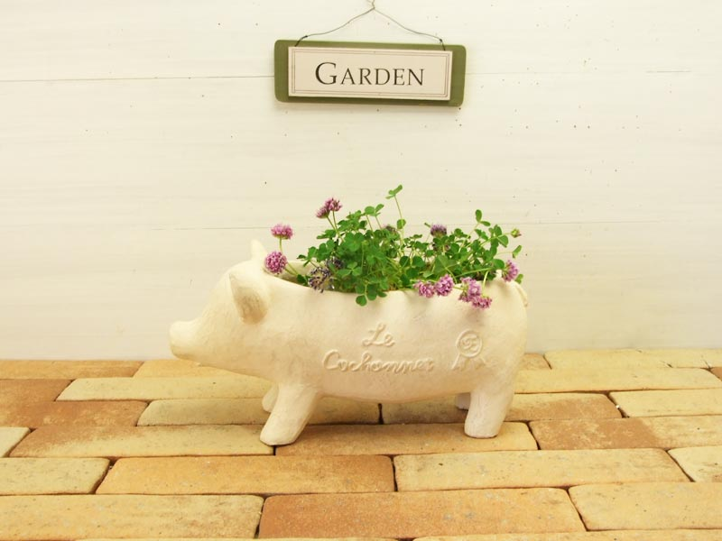 pig-top